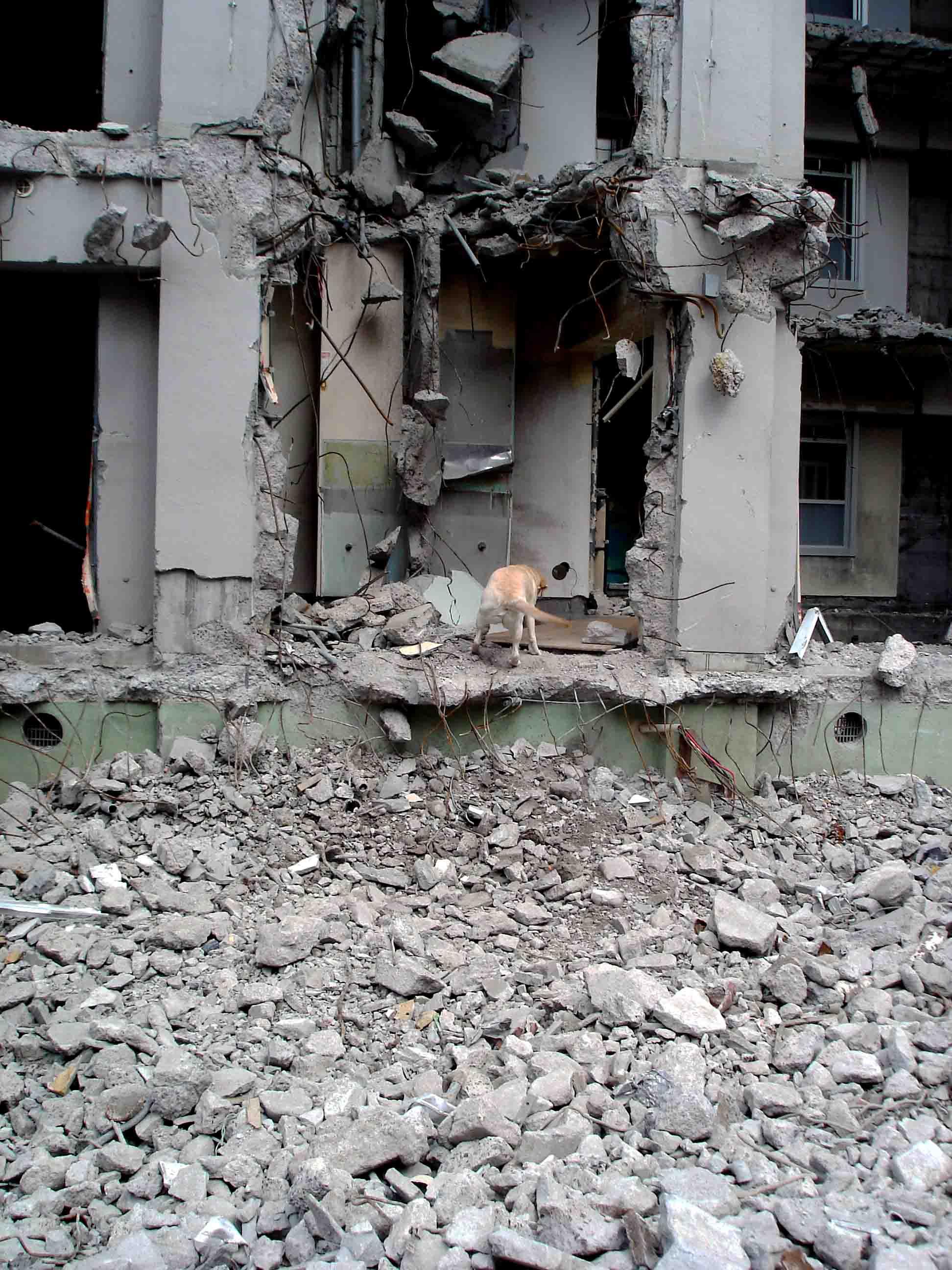 瓦礫現場捜索基礎訓練④