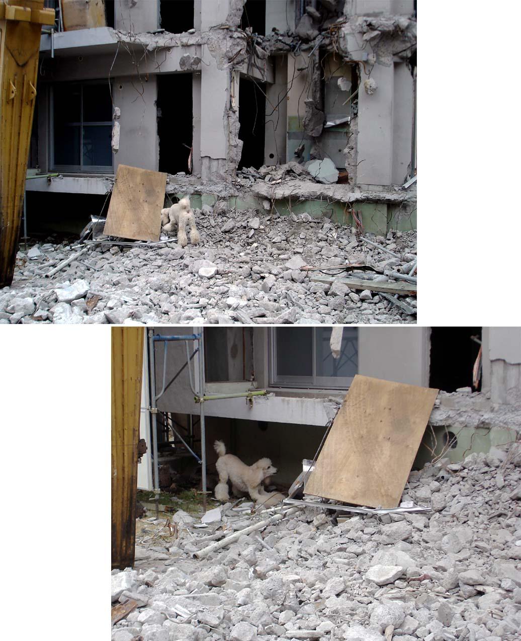 瓦礫現場捜索初歩訓練2-① スタンプー