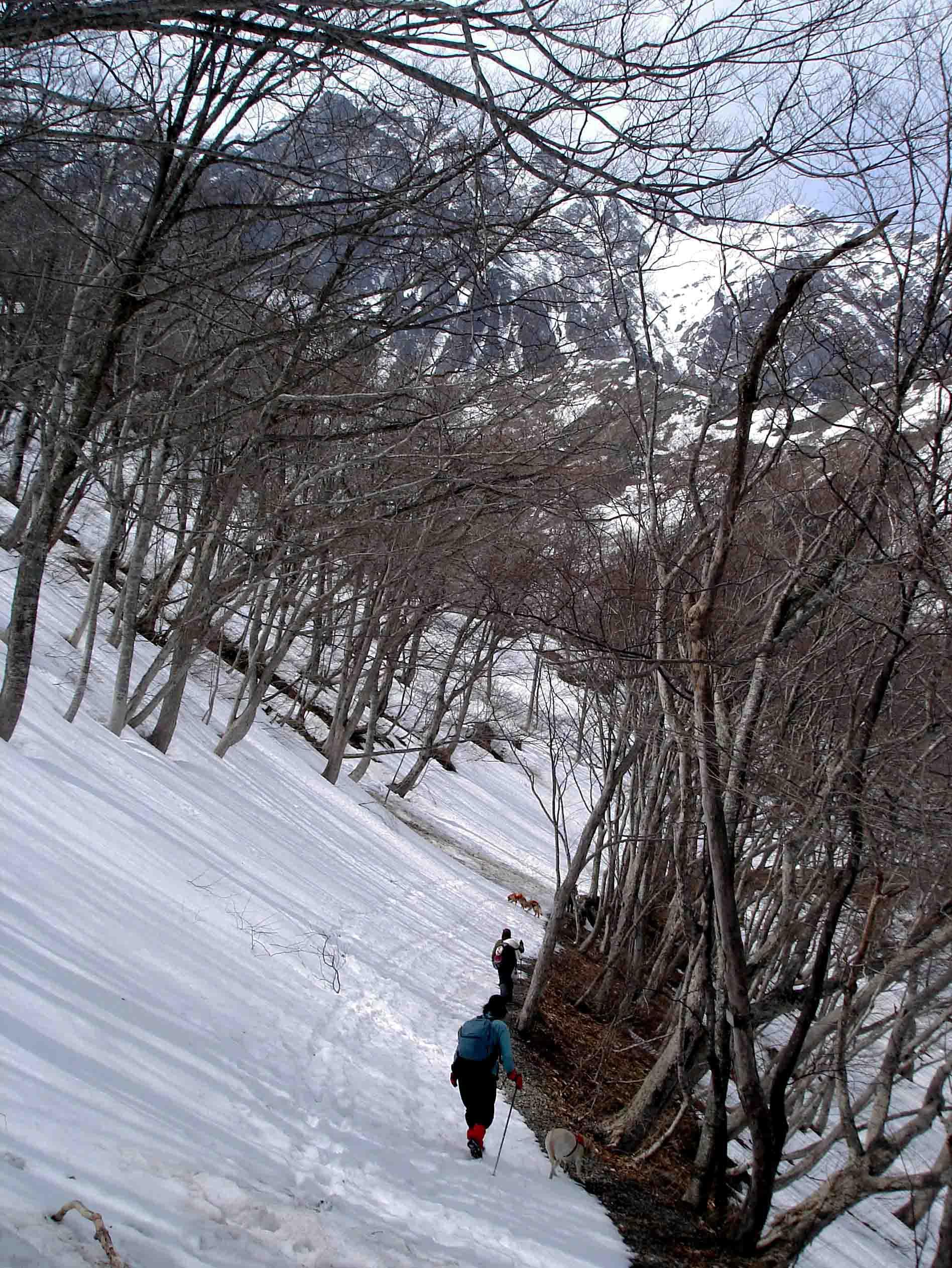 雪中訓練(17) 一ノ倉沢