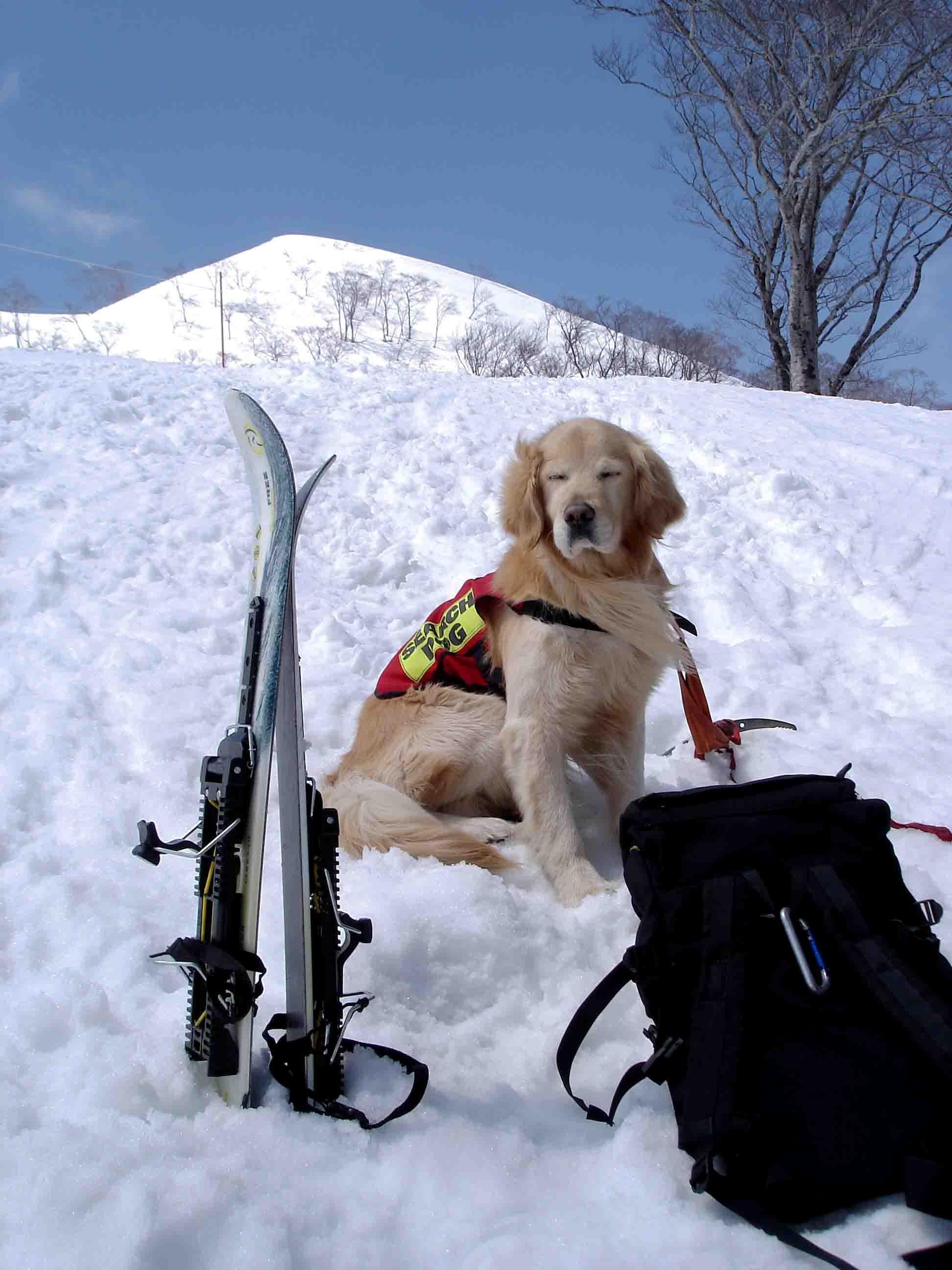 雪中訓練Ⅱ(10) 雪上の至福