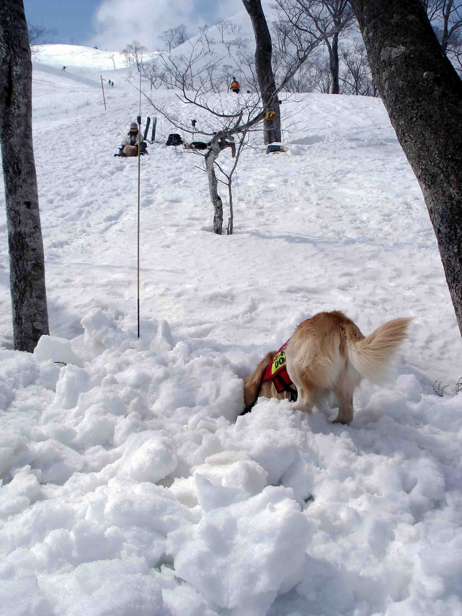雪中訓練Ⅱ(23) チャンス捜索