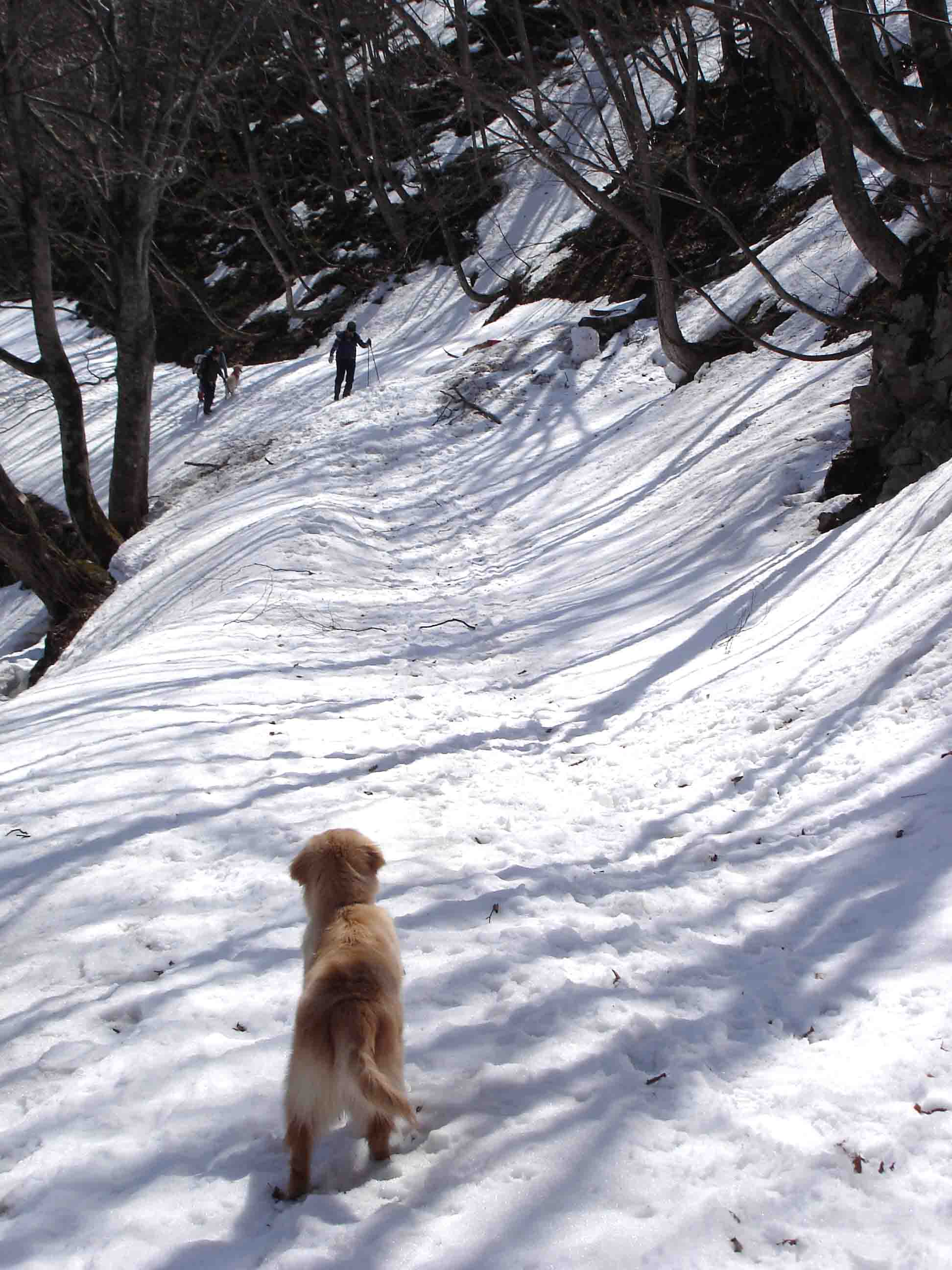 雪中訓練(5) マチガ沢への道