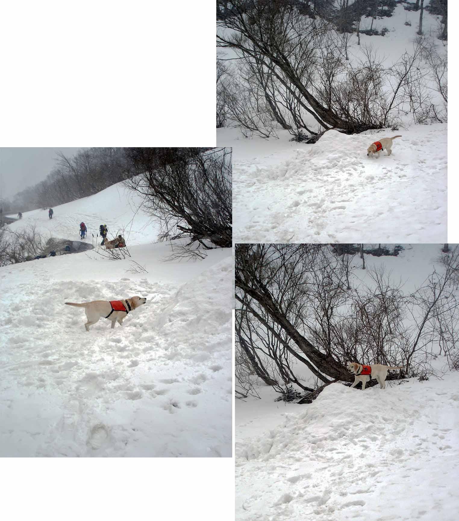 雪中訓練(25) マチガ沢出合にて