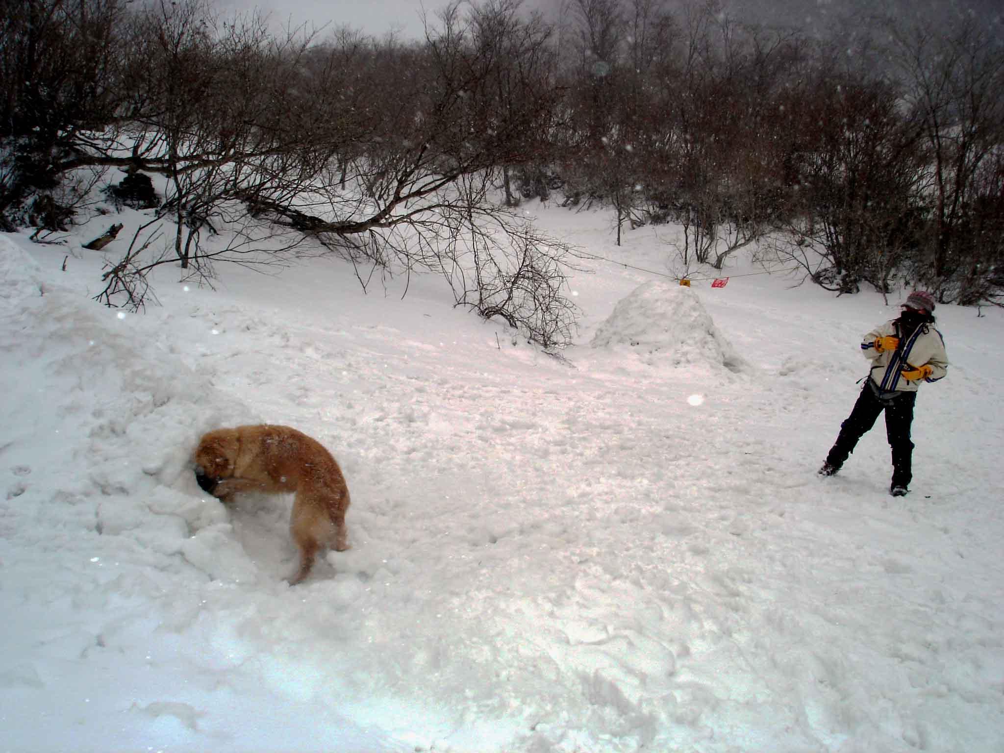 雪中訓練(29) マチガ沢出合にてGMD