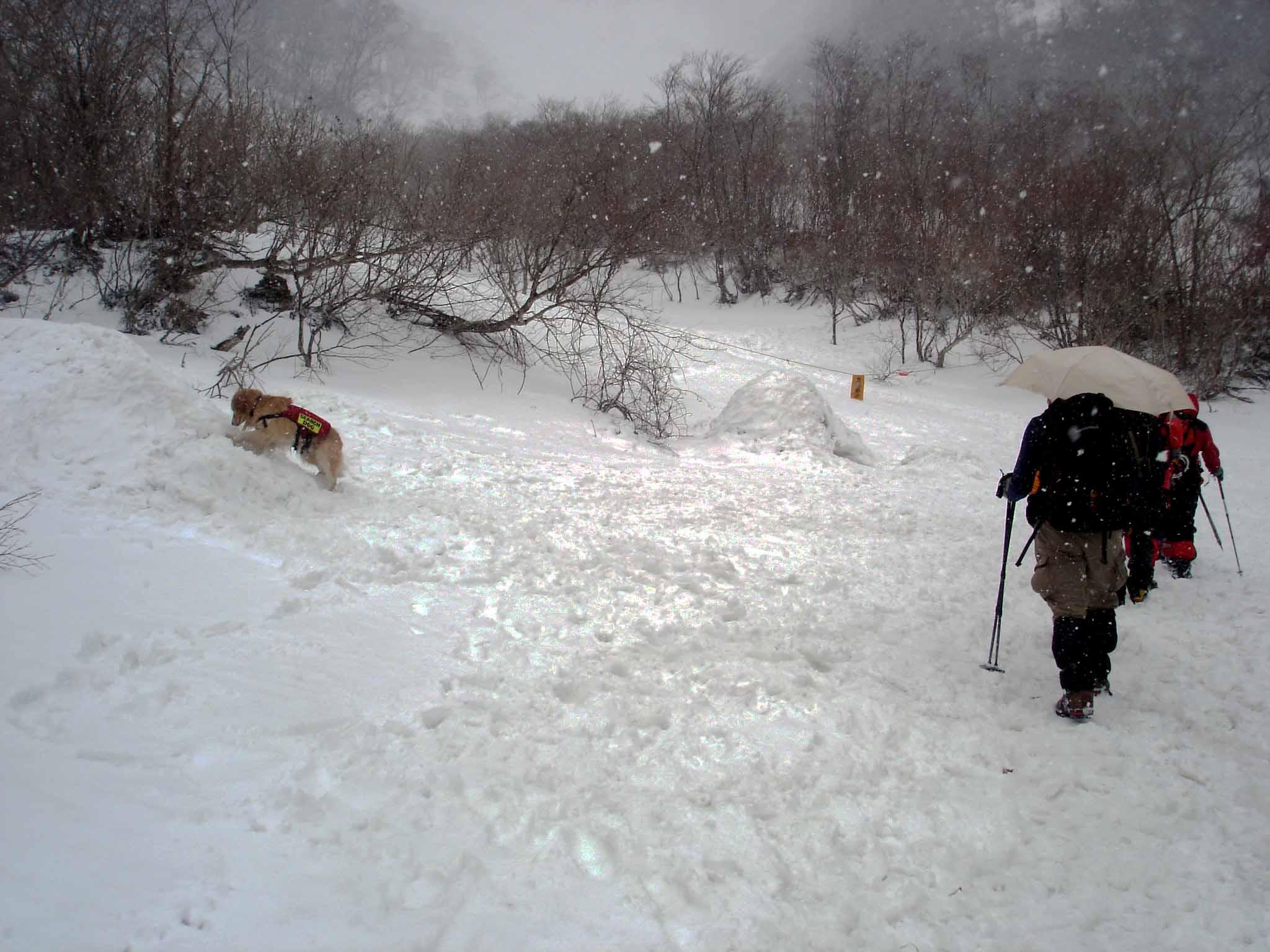 雪中訓練(30) マチガ沢出合にて(チャンス)