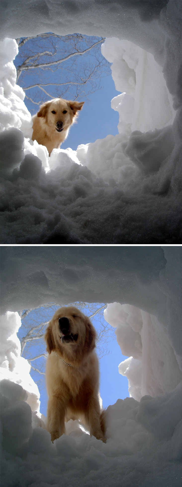 雪中訓練Ⅱ(6) 雪洞から(GMD)