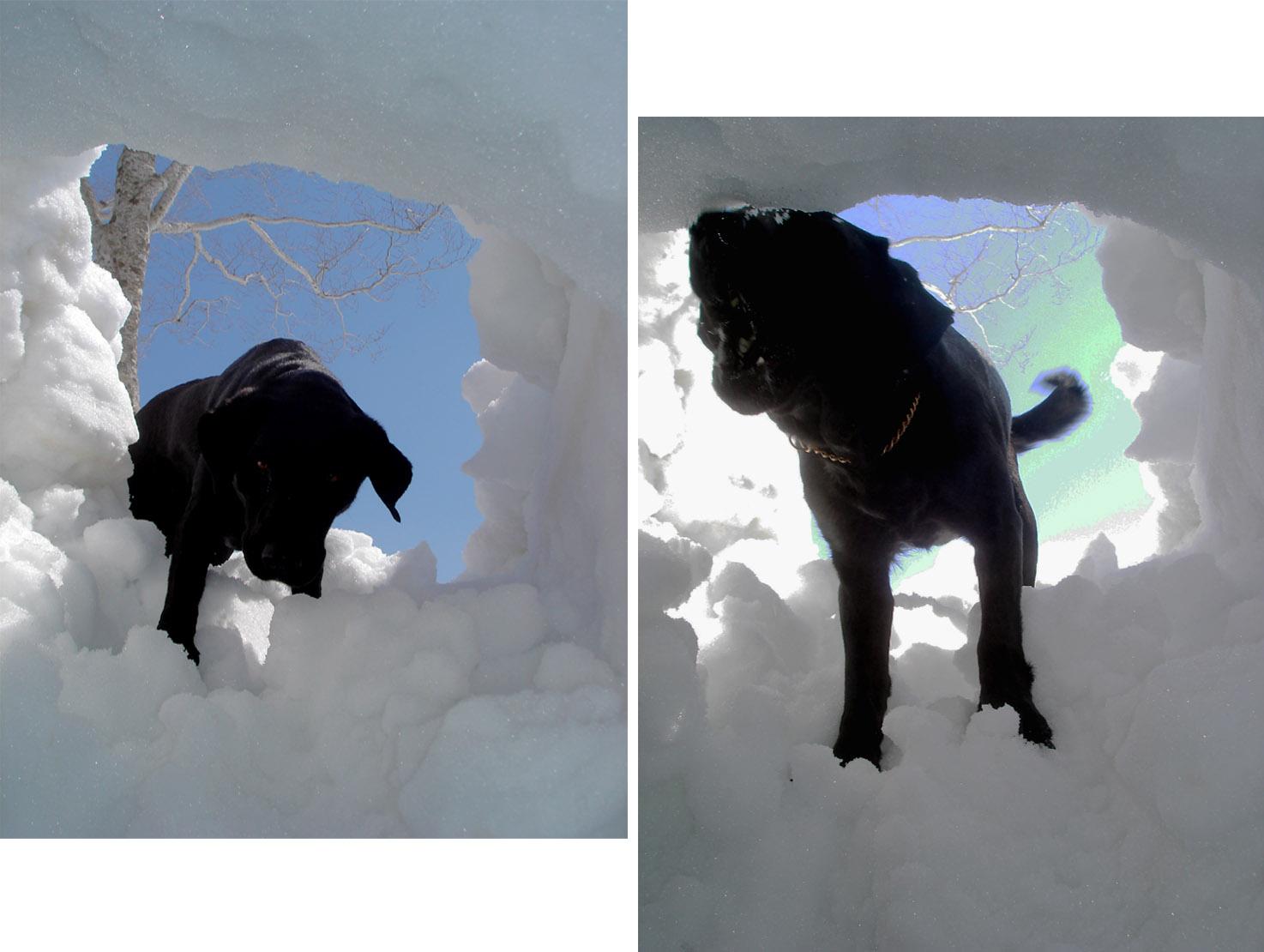 雪中訓練Ⅱ(7) 雪洞から(LPN)