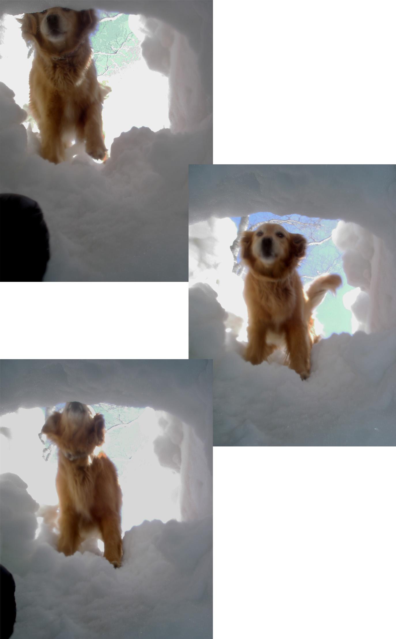 雪中訓練Ⅱ(8) 雪洞から(GGY)