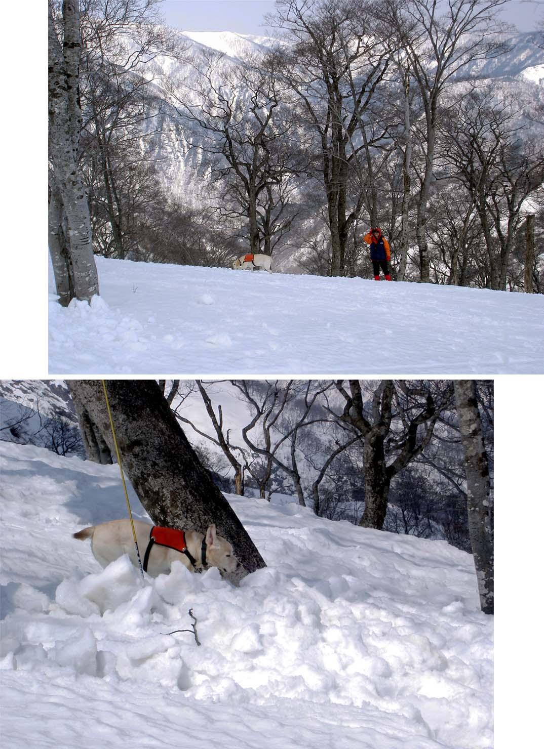 雪中訓練Ⅱ(16) 埋没者捜索