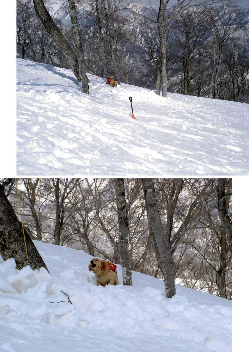 雪中訓練Ⅱ(18) 埋没者捜索