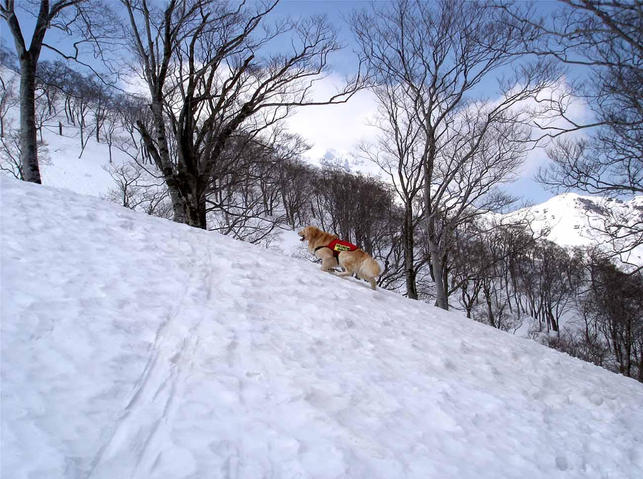 雪中訓練Ⅱ(19) チャンス捜索