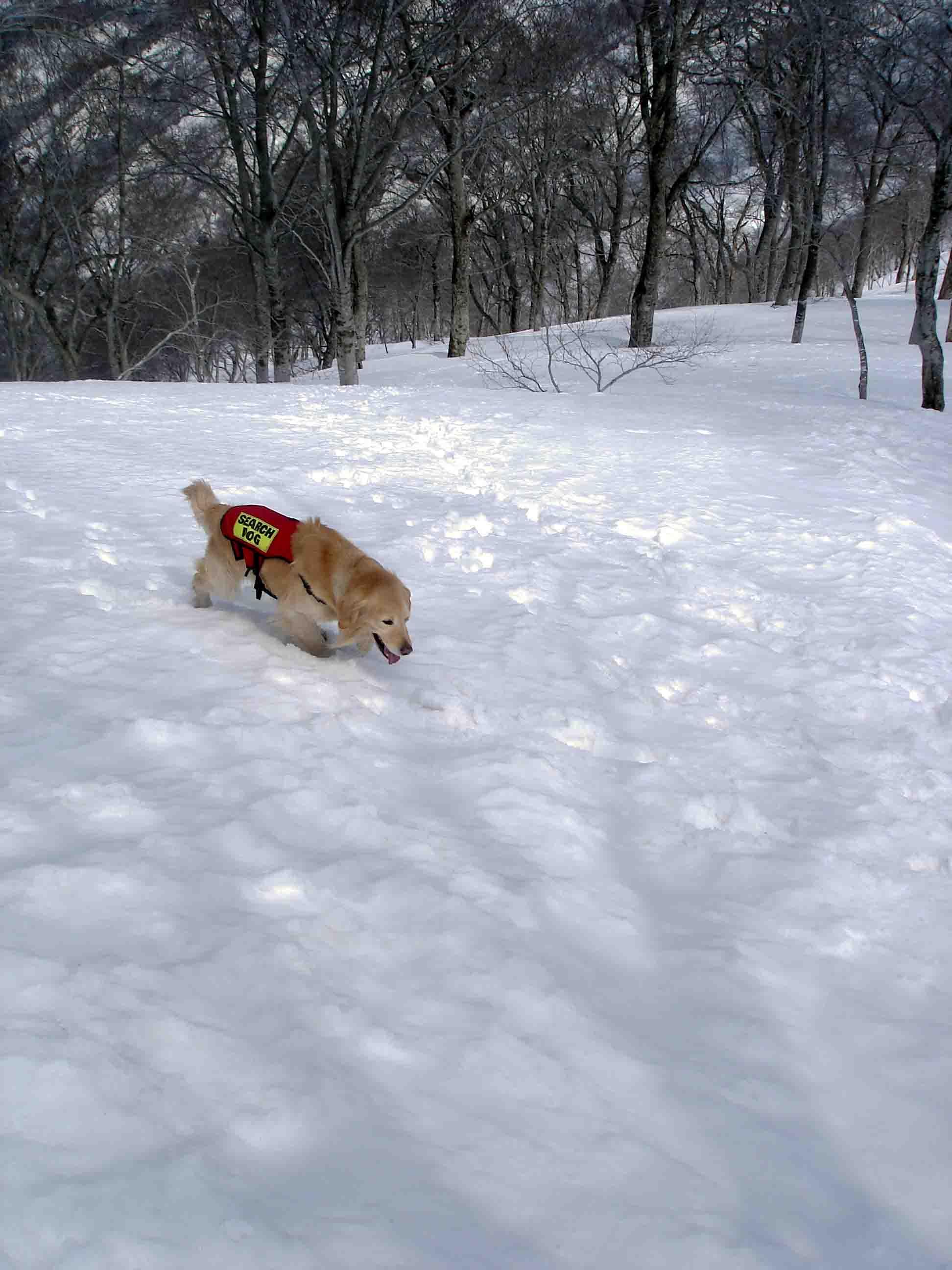 雪中訓練Ⅱ(20) チャンス捜索