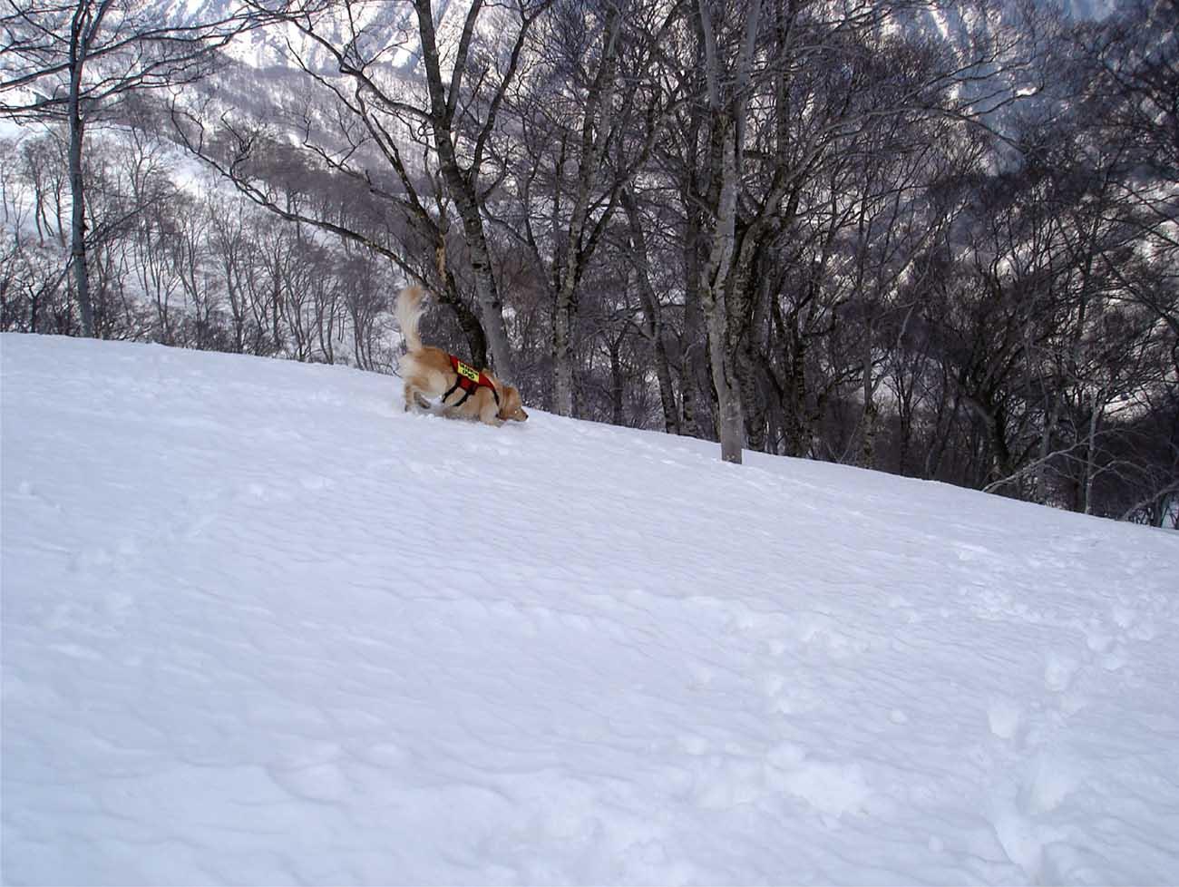 雪中訓練Ⅱ(21) チャンス捜索