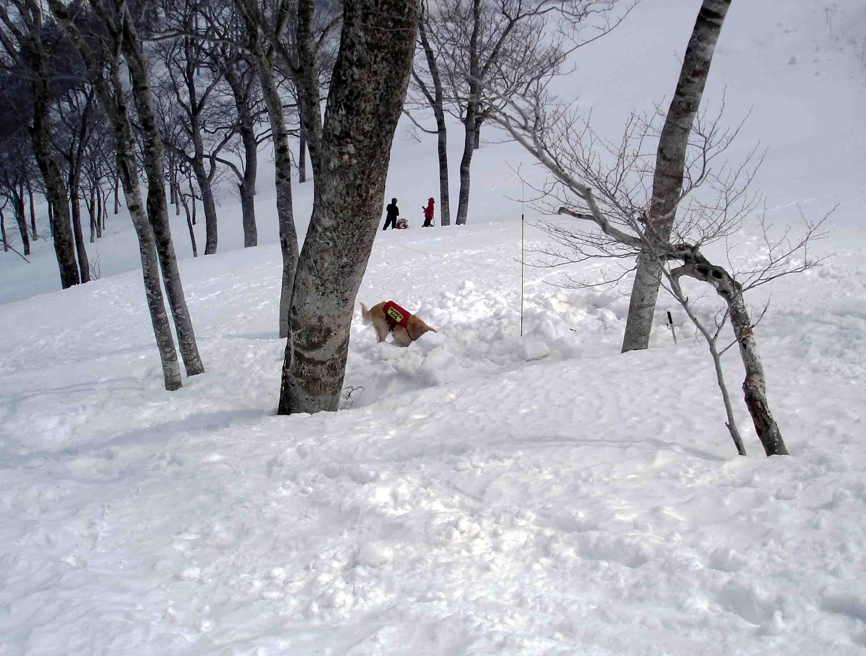 雪中訓練Ⅱ(22) チャンス捜索