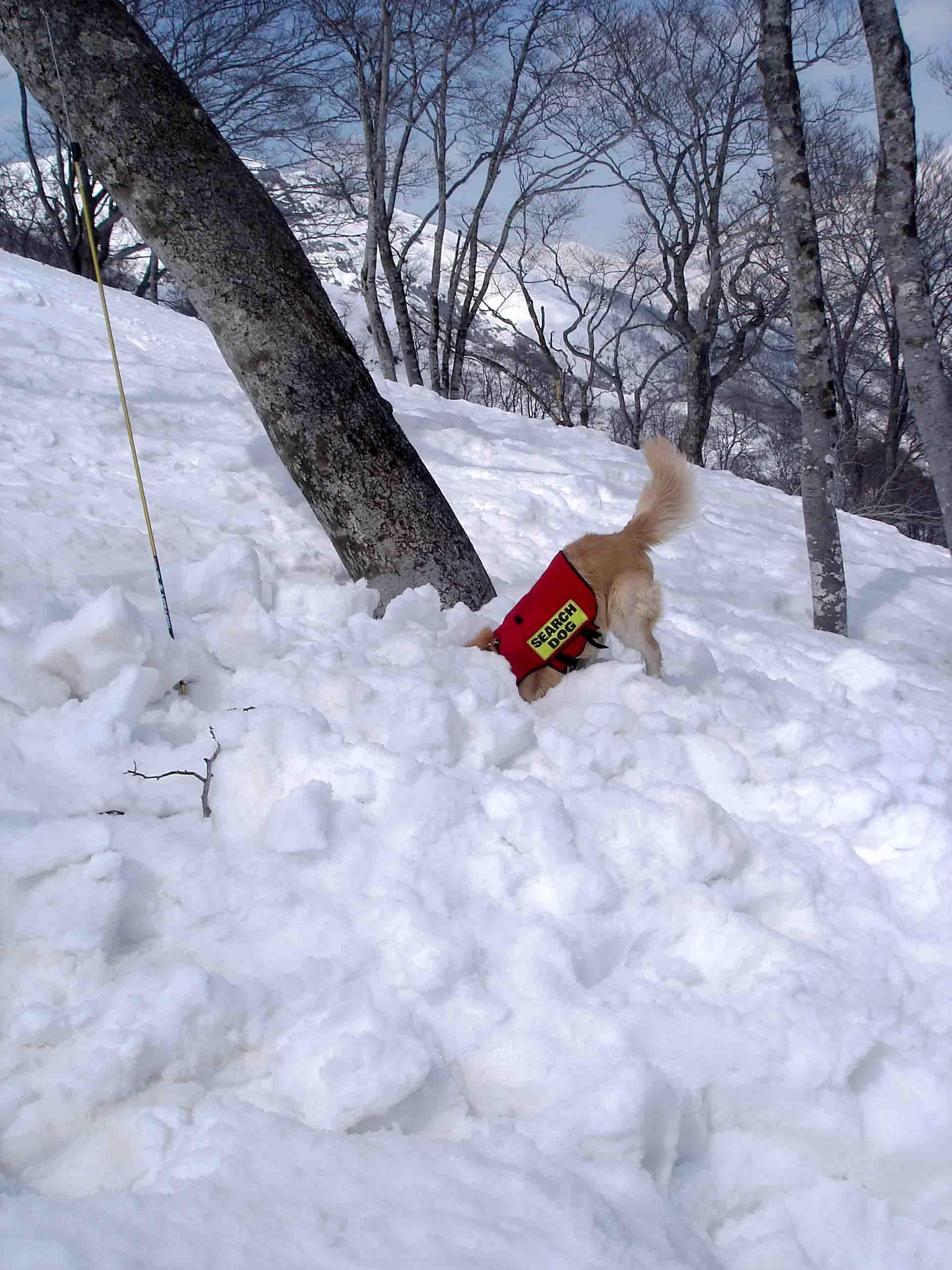 雪中訓練Ⅱ(24) チャンス捜索