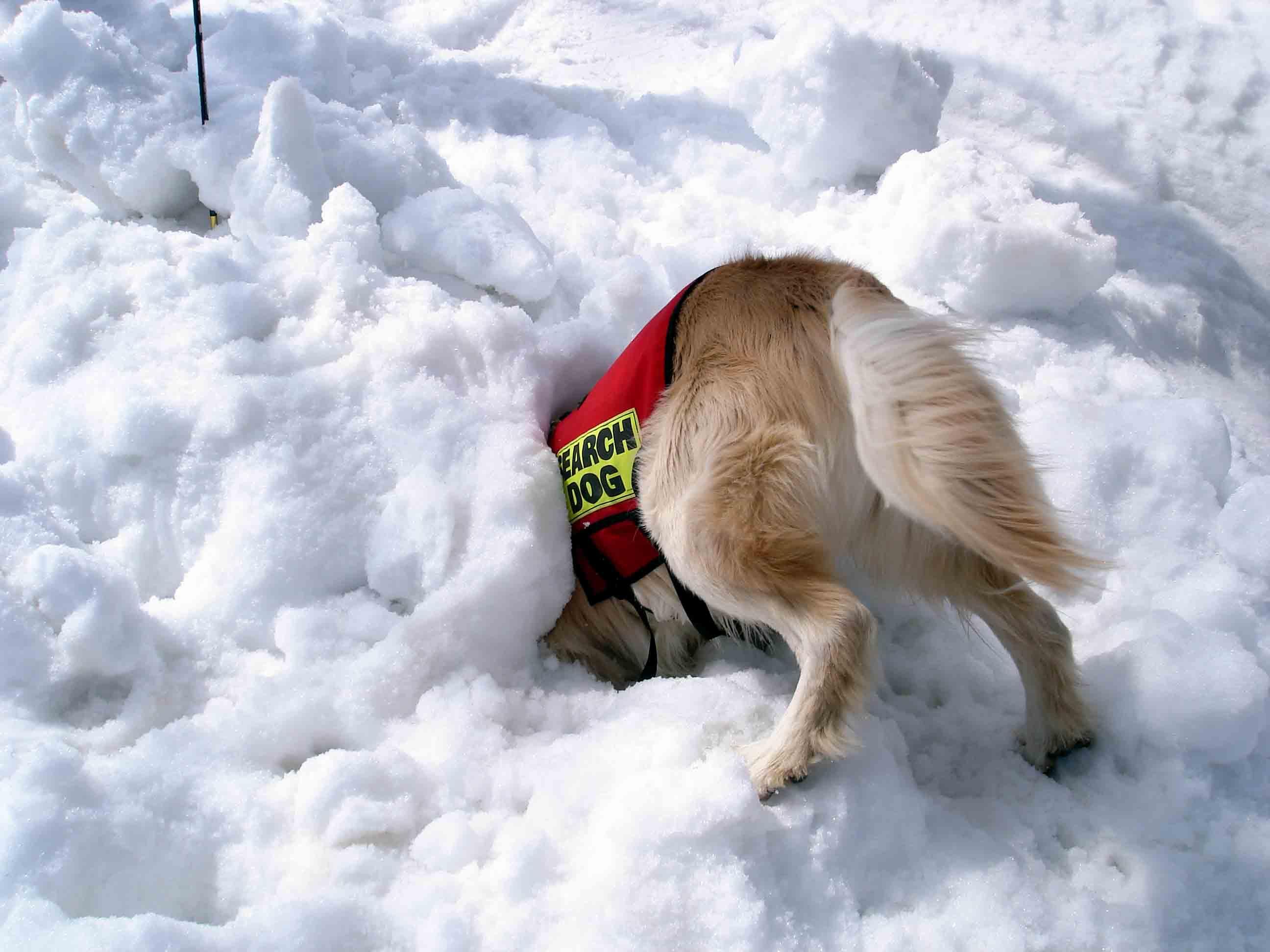 雪中訓練Ⅱ(25) チャンス捜索