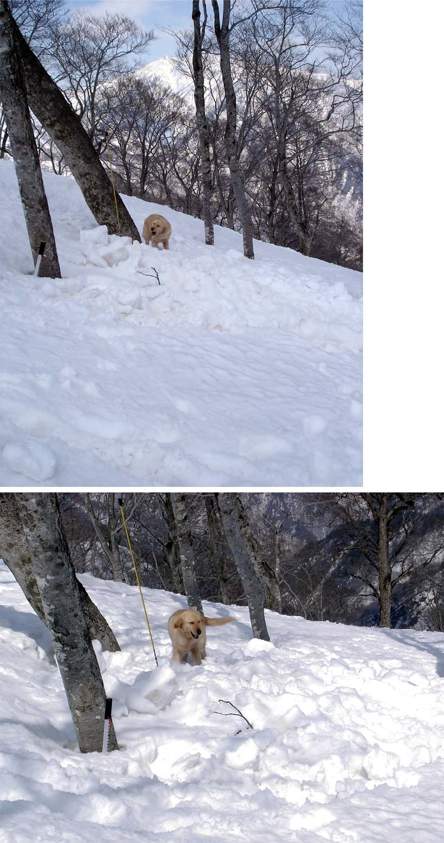 雪中訓練Ⅱ(26) GMD捜索