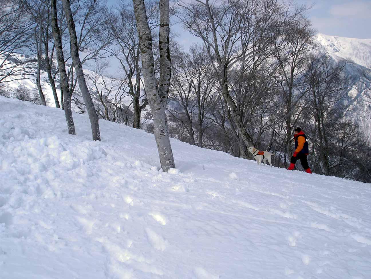 雪中訓練Ⅱ(29) LTK捜索