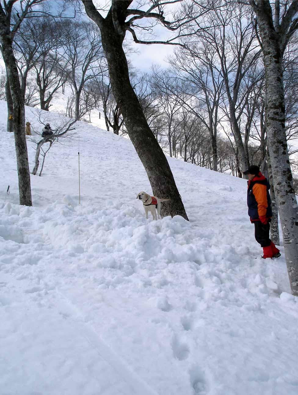 雪中訓練Ⅱ(30) LTK捜索