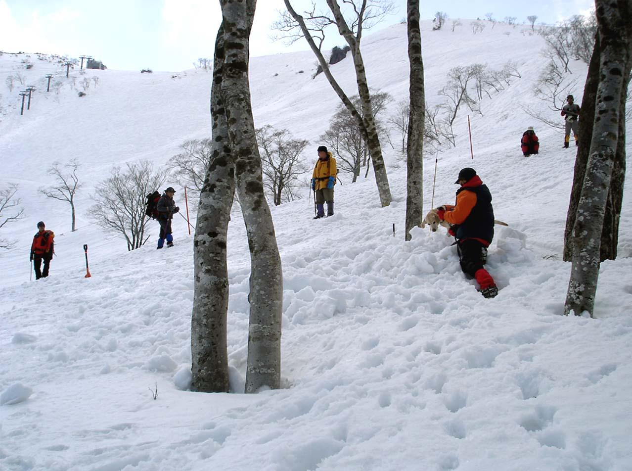 雪中訓練Ⅱ(31) LTK捜索
