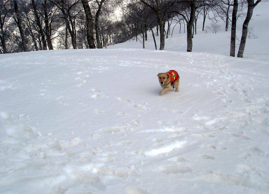 雪中訓練Ⅱ(32) GMK捜索