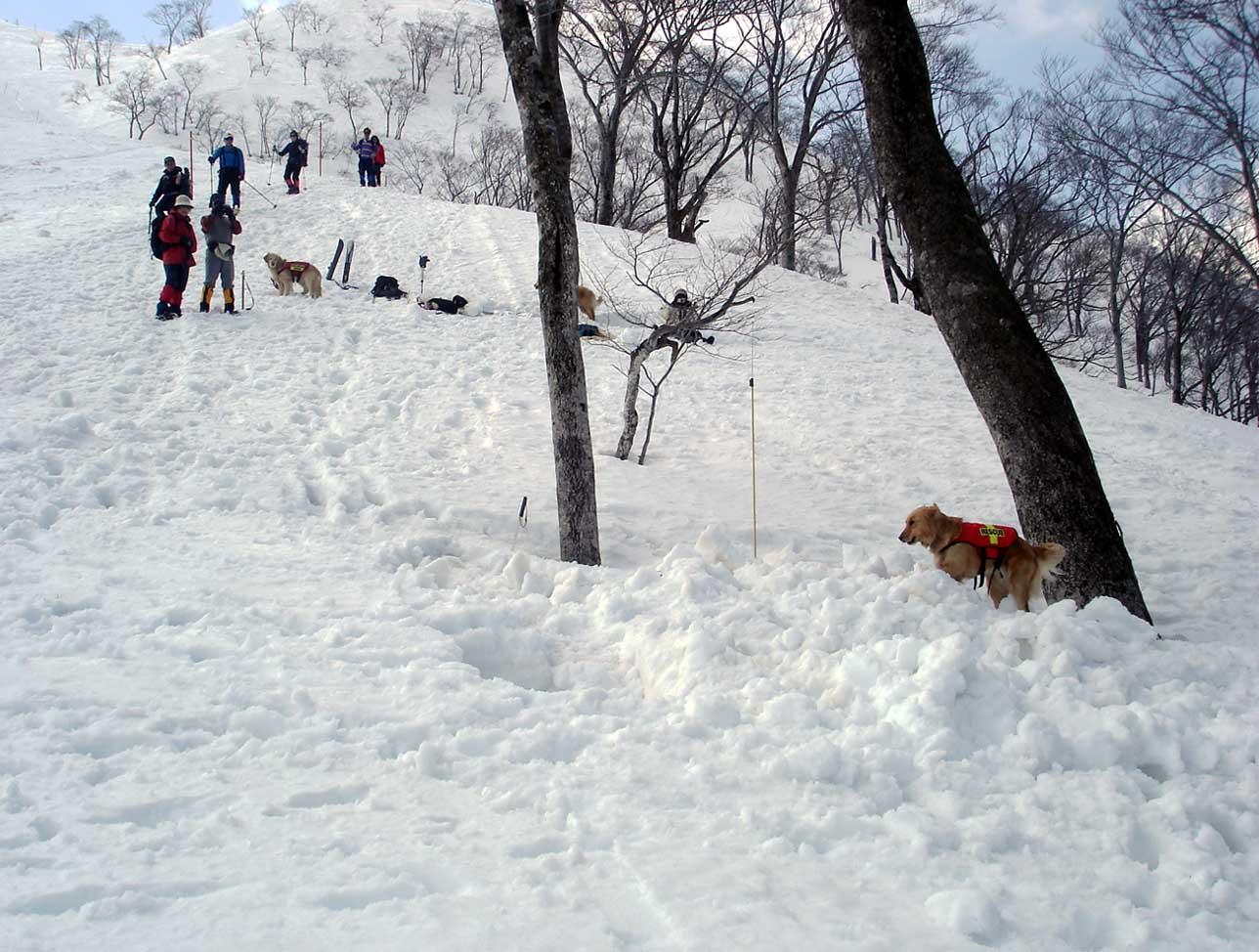 雪中訓練Ⅱ(33) GMK捜索