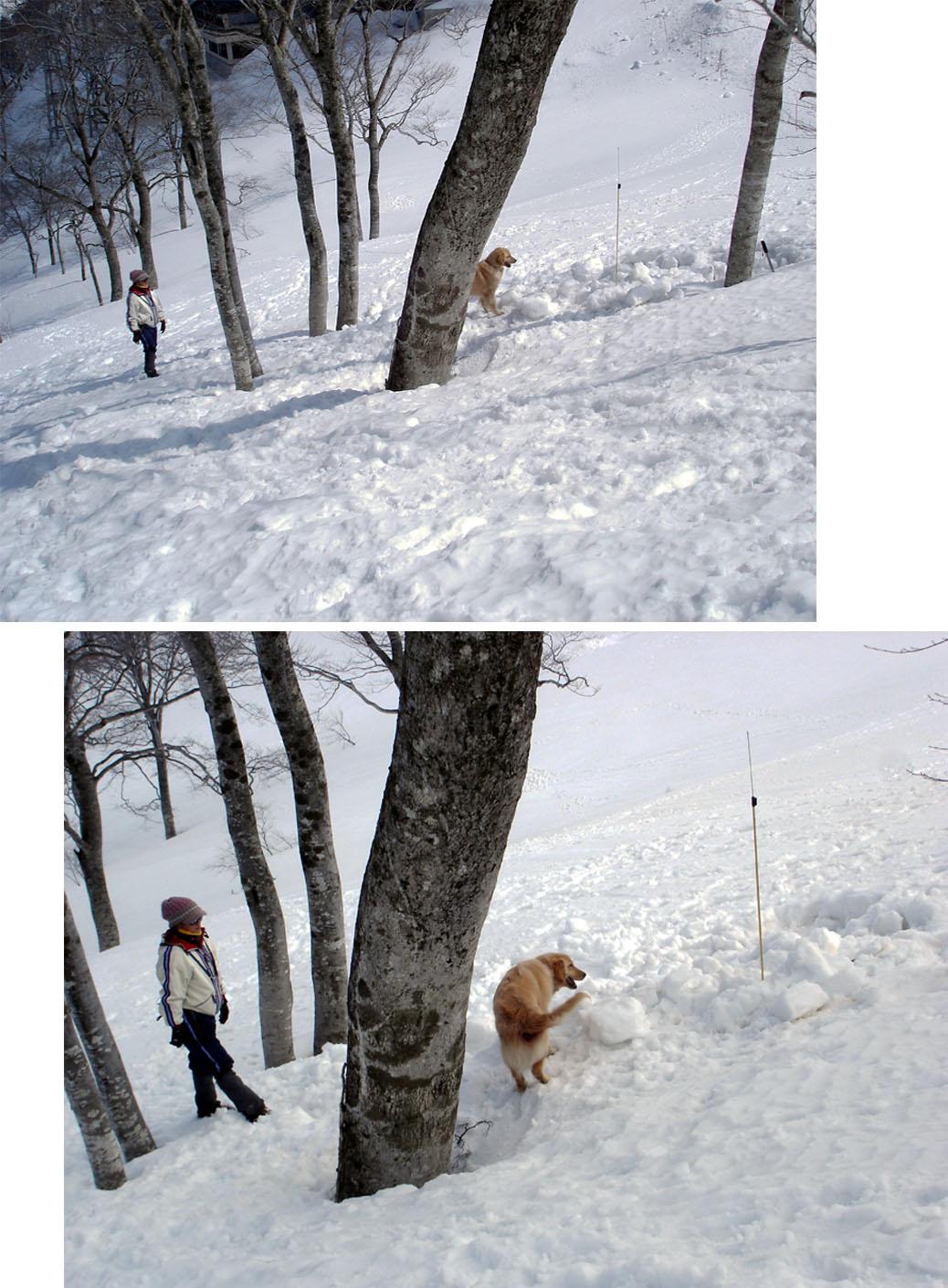 雪中訓練Ⅱ(34) GMD捜索