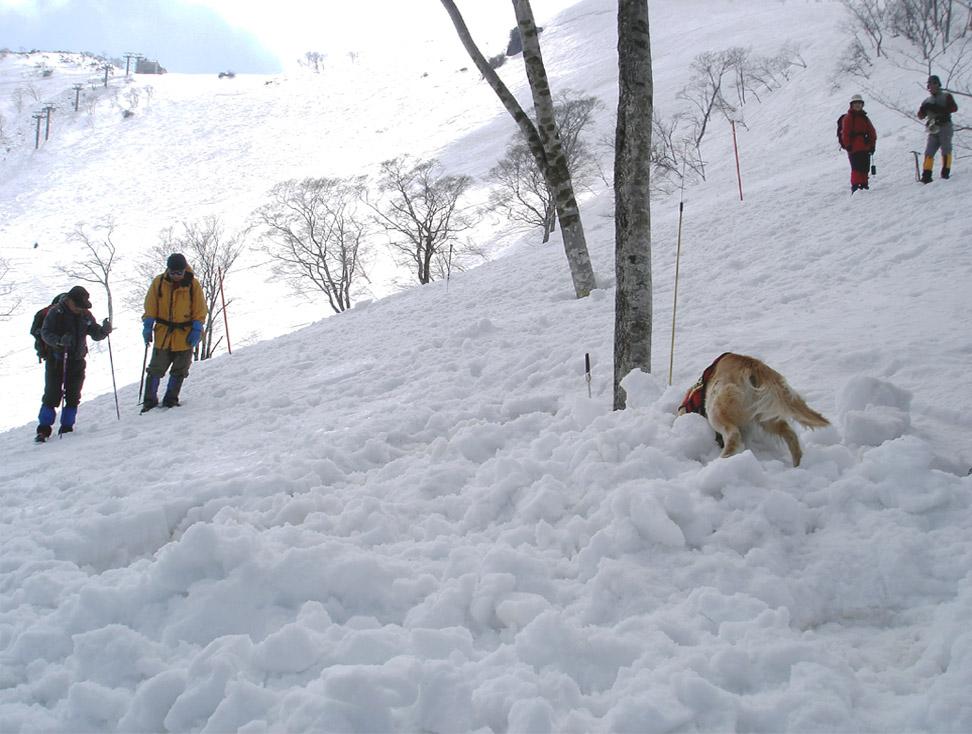 雪中訓練Ⅱ(35) チャンス捜索