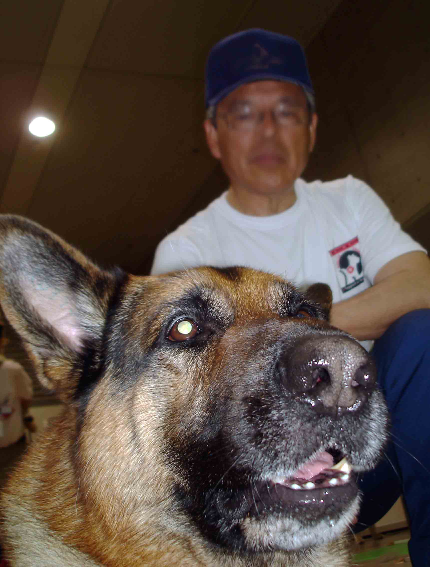 ペット博 大きな犬から小さな犬まで①