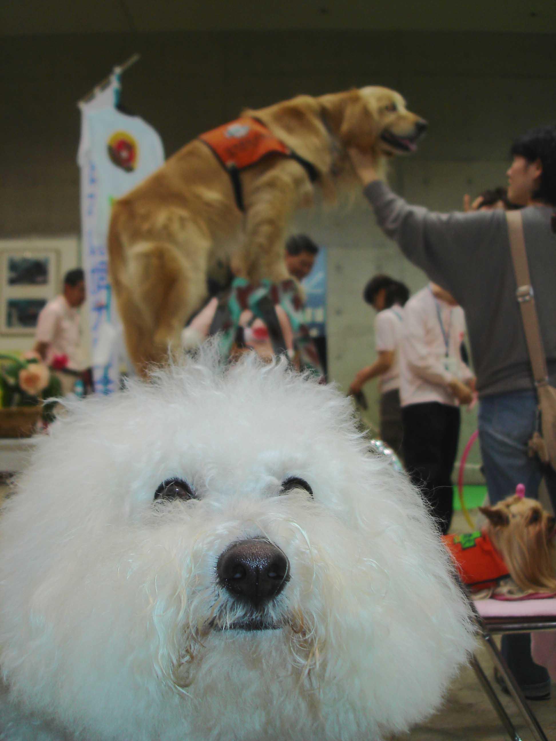 ペット博 大きな犬から小さな犬まで④