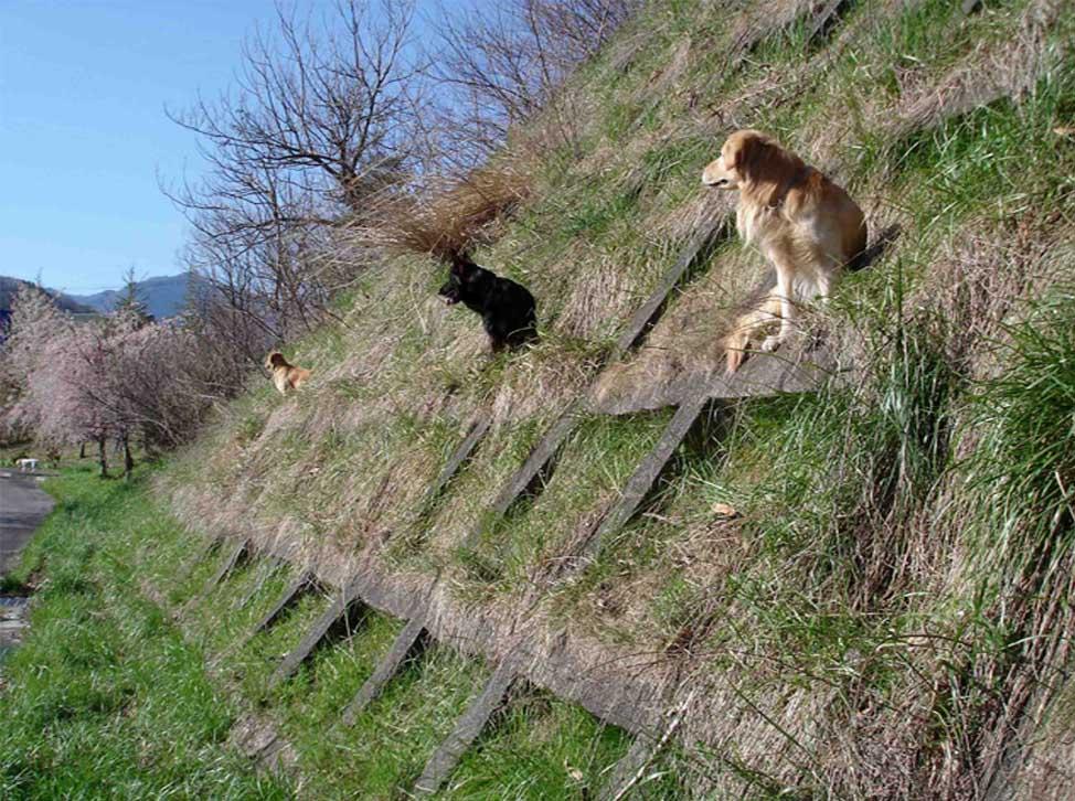 川上村TC-3 格子状壁にて 3犬