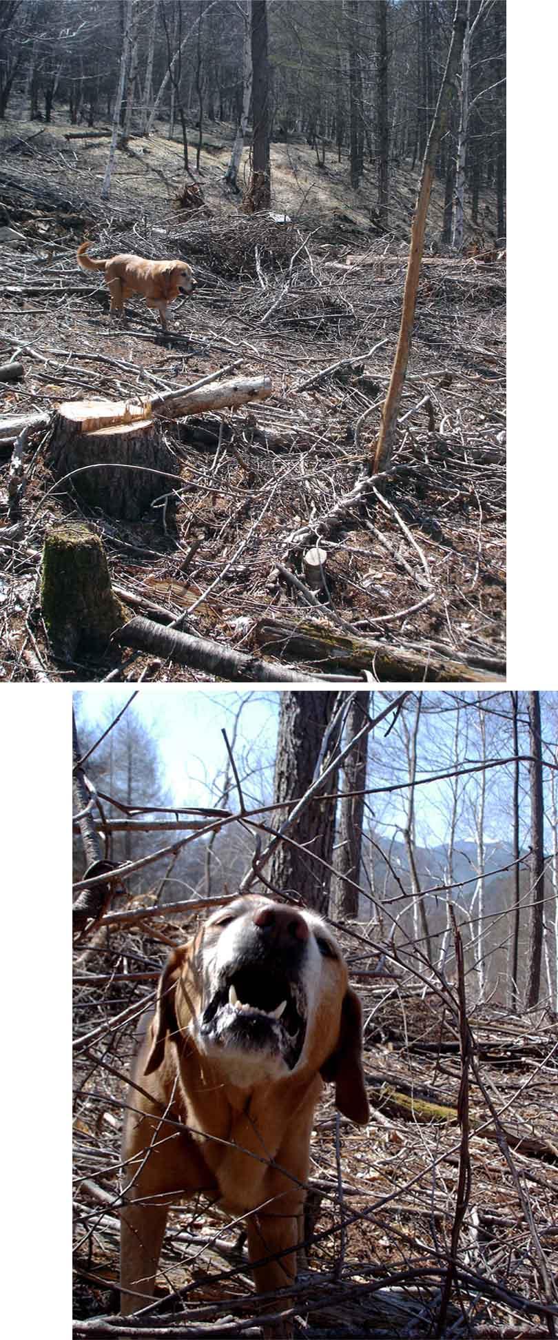 川上村TC-41 林間での基礎訓練⑤