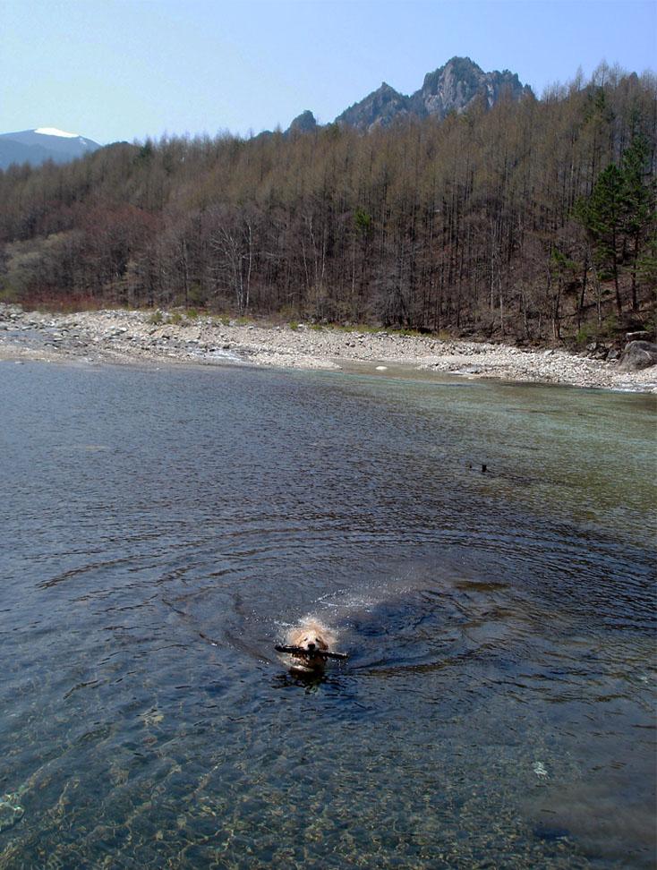 川上村TC-48 水泳&レトリーブ⑦