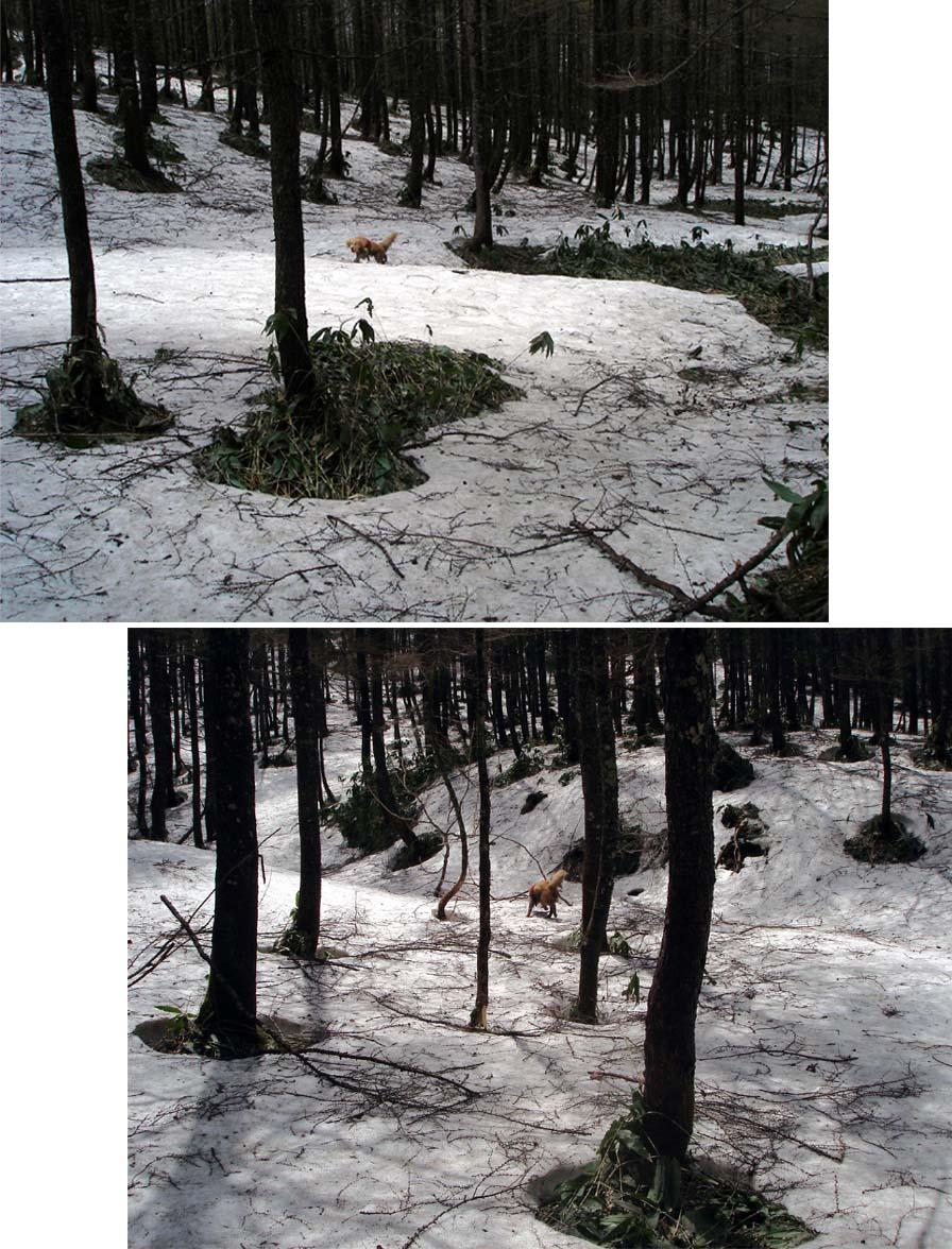 丸黒山捜索(2006.5.11~13)③