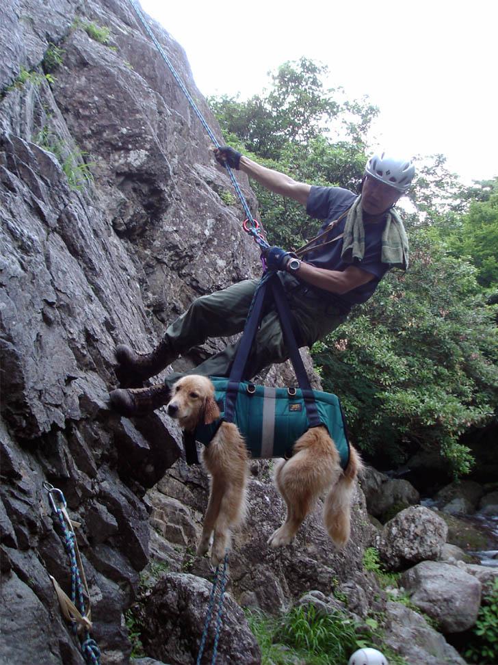 犬と懸垂下降②(下降器掛け)