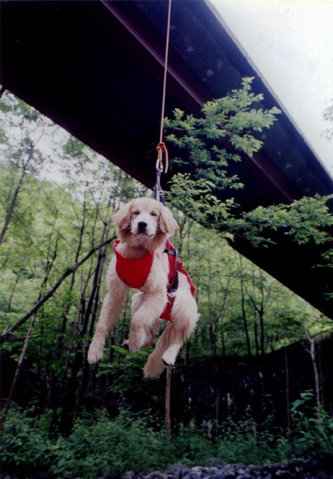 チャンスの吊り下げ(2003年7月)