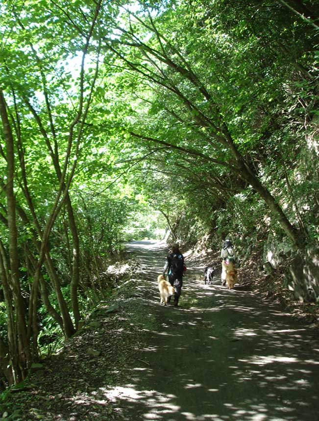 林道を行く