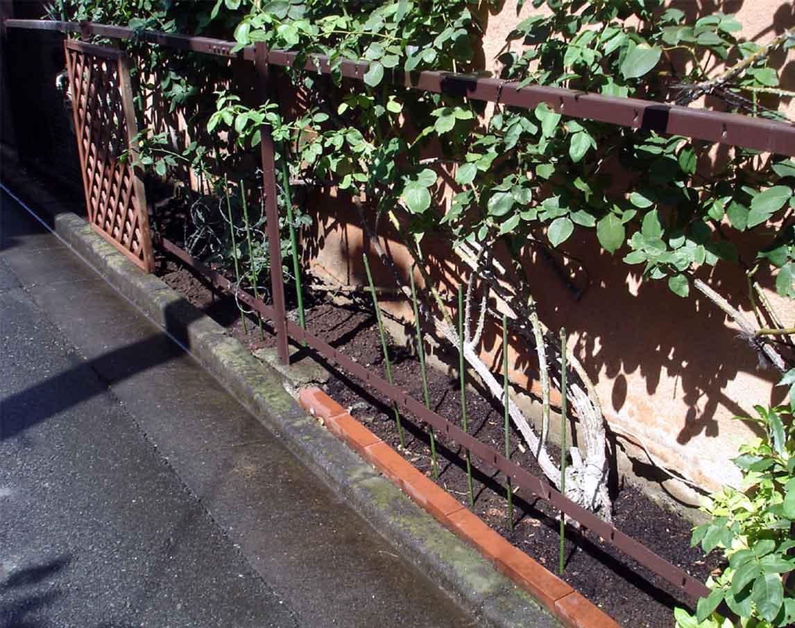 2010.8.6 バラ周辺散水