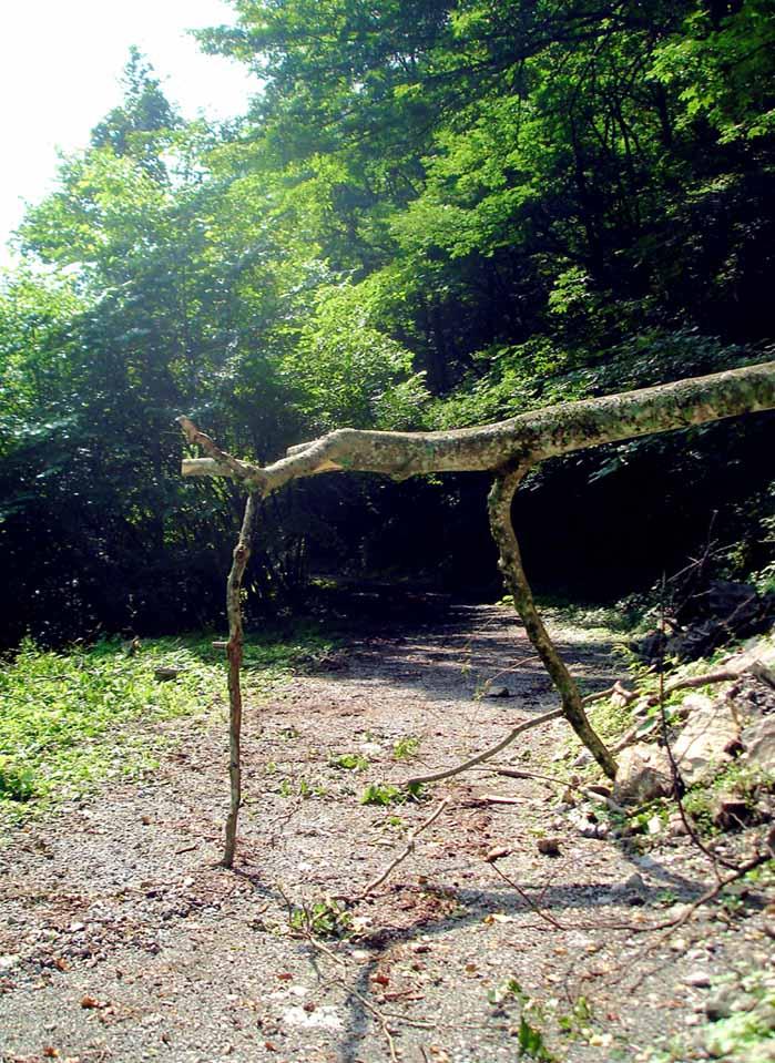 三峰川 20100816 倒木のオブジェ