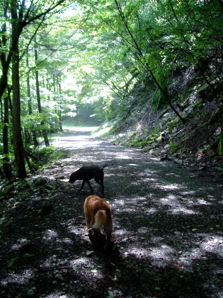 三峰川 20100816 真夏の木漏れ日林道
