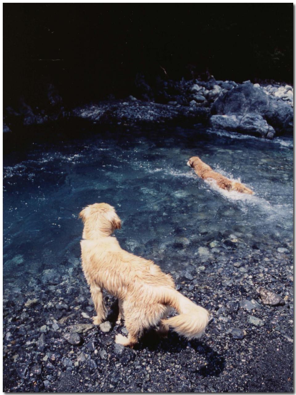 2003年5月の三峰川① BLG