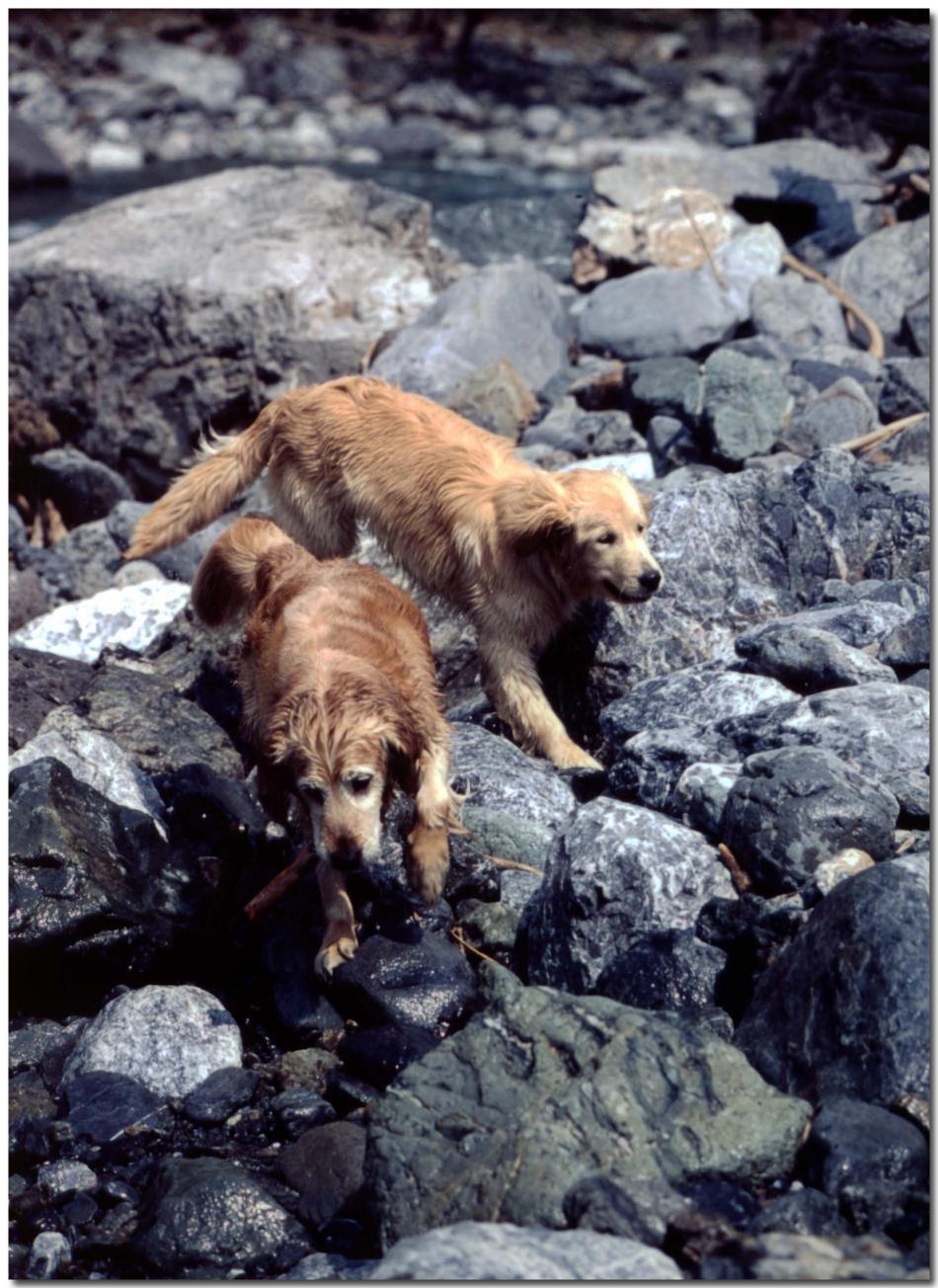 2003年5月の三峰川⑤ BLG