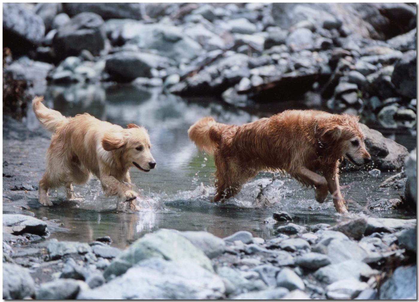 2003年5月の三峰川⑥ BLG