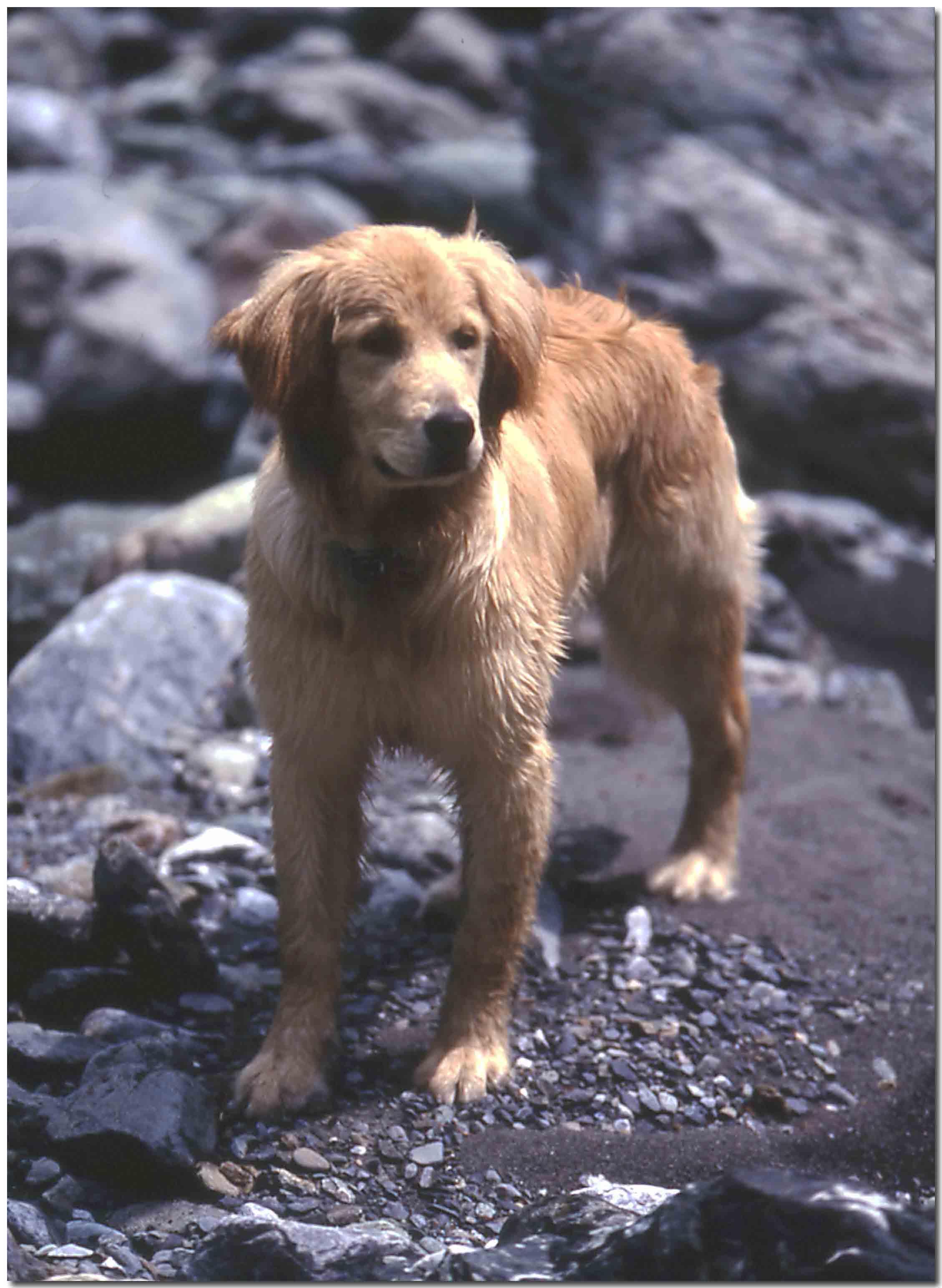 2003年5月の三峰川Ⅱの⑥ BLG