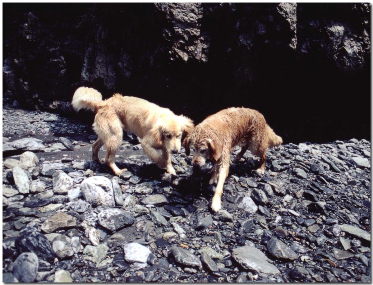 2003年5月の三峰川⑦ BLG