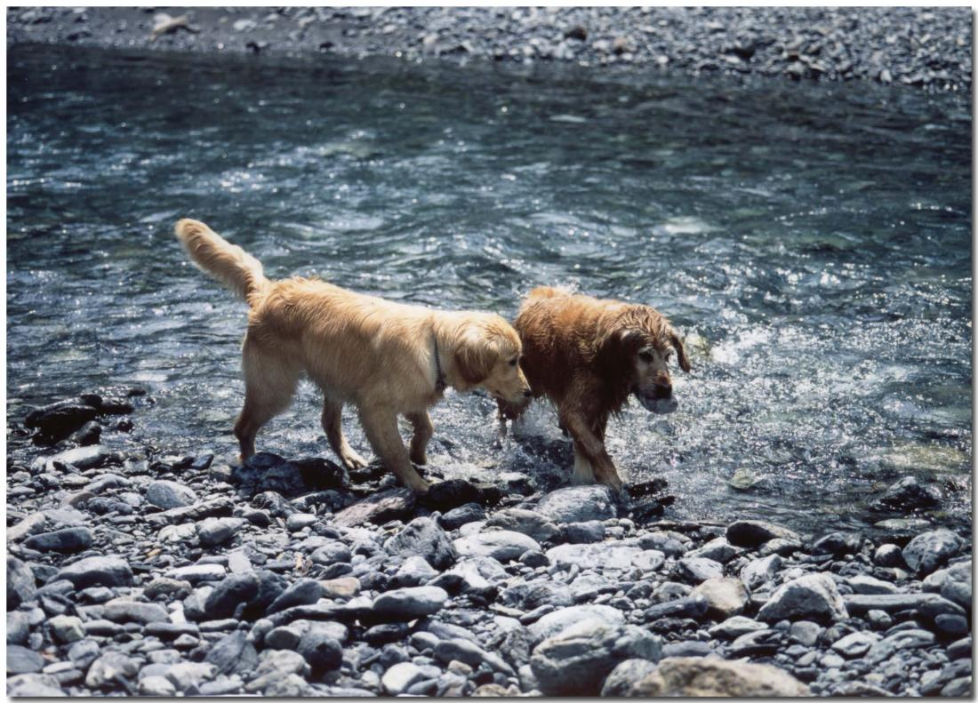 2003年5月の三峰川⑧ BLG