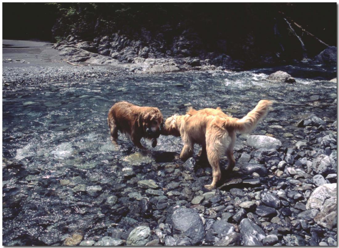 2003年5月の三峰川⑨ BLG