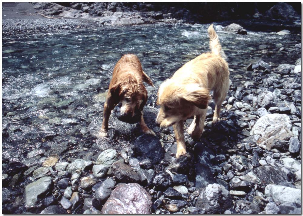 2003年5月の三峰川⑩ BLG