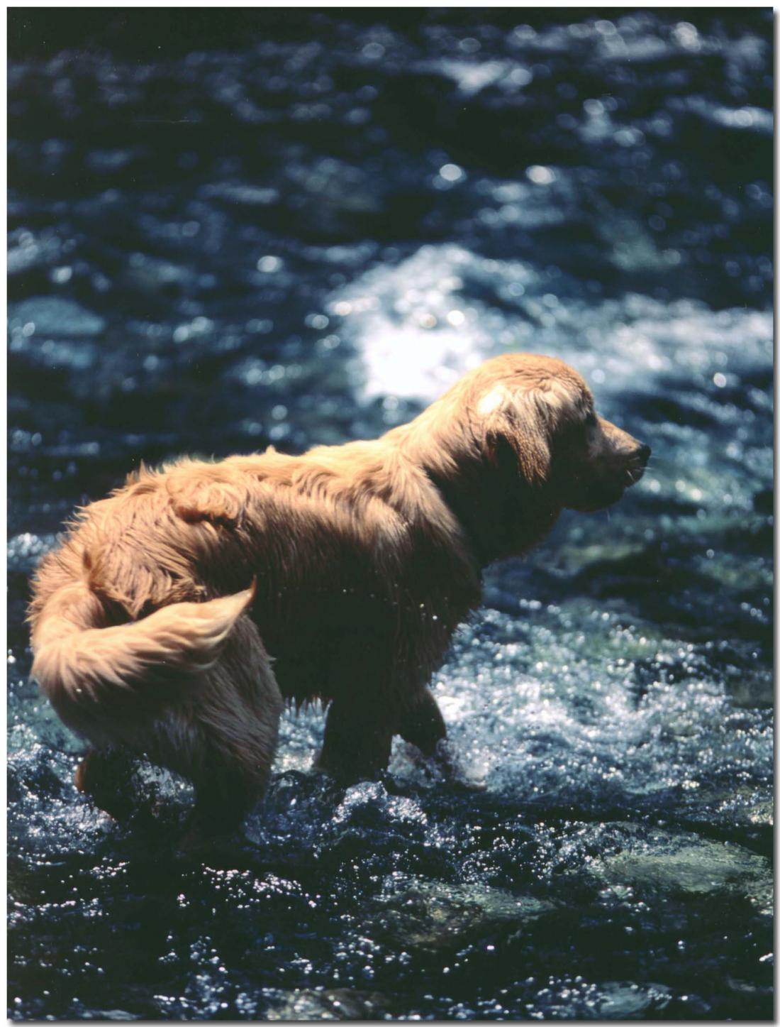 2003年5月の三峰川⑪ BLG