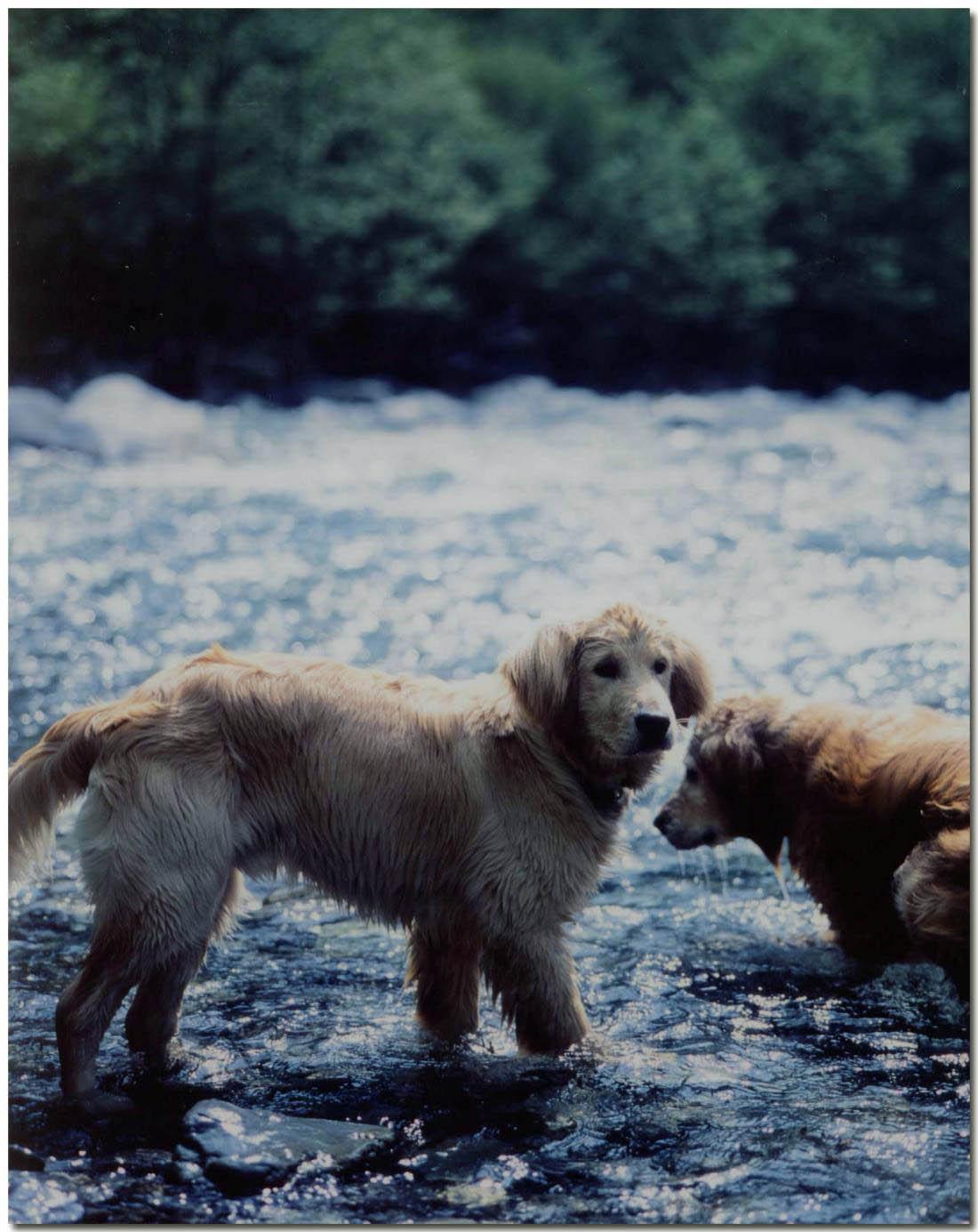 2003年5月の三峰川⑫ BLG